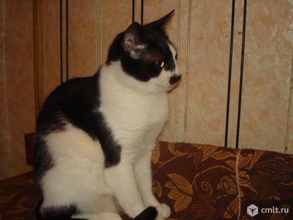 Молодой котик Тимоша - в ответственные любящие  руки. Фото 1.