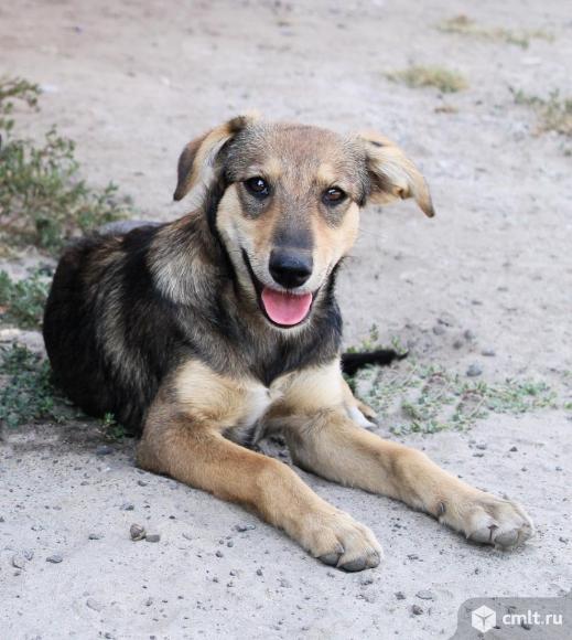 Собака-улыбака Шелли. Фото 1.