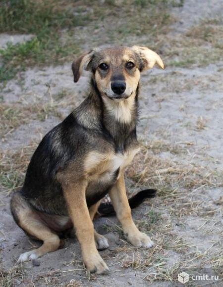 Собака-улыбака Шелли. Фото 4.