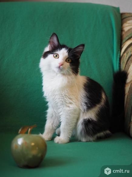 Котенок Маруся в дар. Фото 1.