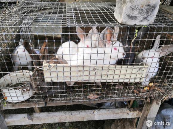 Крольчата разных пород. Фото 1.