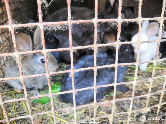 Крольчата разных пород. Фото 3.