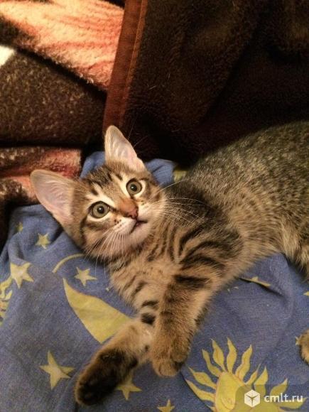 Котёнок в добрые руки. Фото 3.