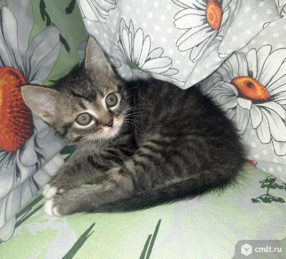Ищем дом котенку кошечке. Фото 1.