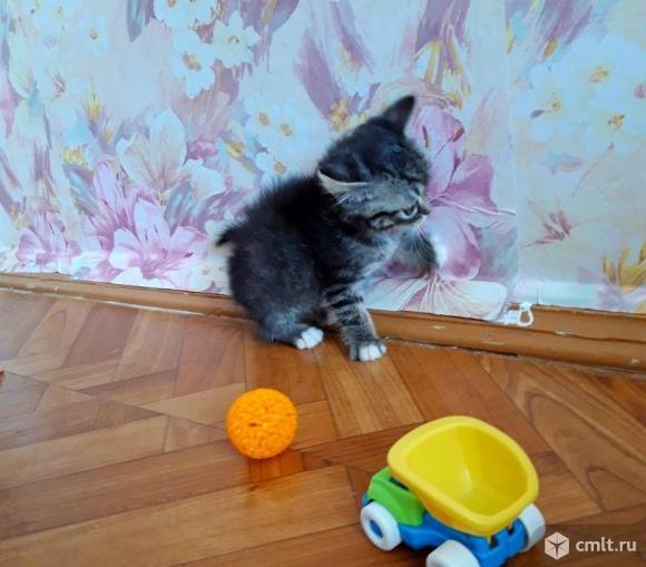 Ищем дом котенку кошечке. Фото 3.