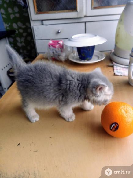 Продаю котёнка.. Фото 2.