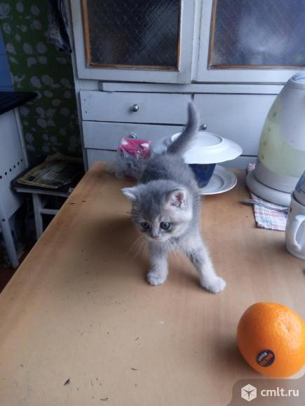Продаю котёнка.. Фото 1.