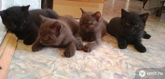 Очаровательные котята. Фото 1.