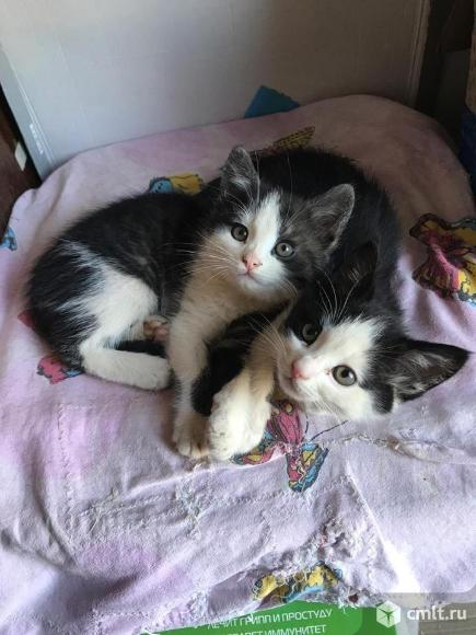 Шикарный котята в дар.. Фото 1.