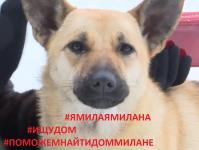 #ямилаямилана #поможемнайтидоммилане #помощьбездомнымсобакам #помощьбезнадзорнымживотным #ищудом #собакадругчеловека #собакимояжизнь #люблюсобак #освв