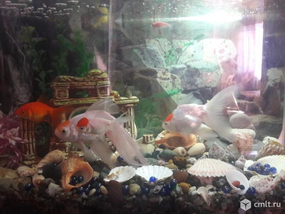 Продается аквариум на 80 литров. Фото 1.