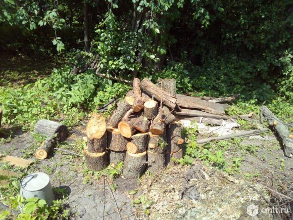 Опиловку крон деревьев, распиливание сухостоя. Фото 4.