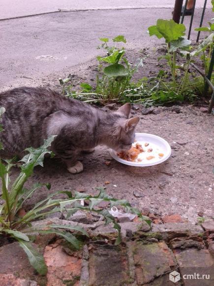 Кошечка серого цвета в хорошие руки. Фото 4.