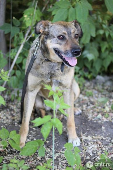 Крупная собака Лара. Фото 8.