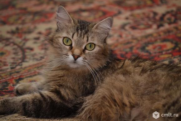 Стерилизованная кошка Маня - в хорошие руки. Фото 1.