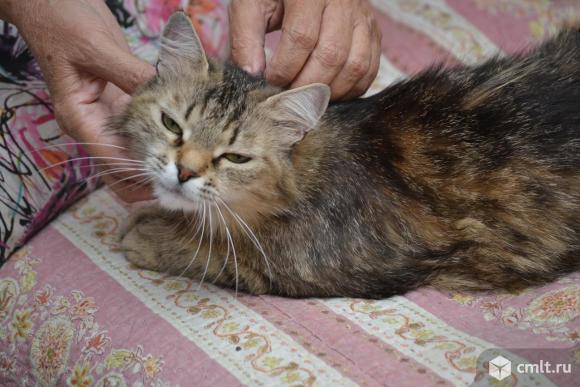 Стерилизованная кошка Маня - в хорошие руки. Фото 2.