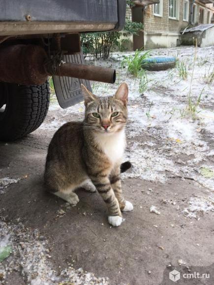 Ласковый котик в добрые руки. Фото 1.