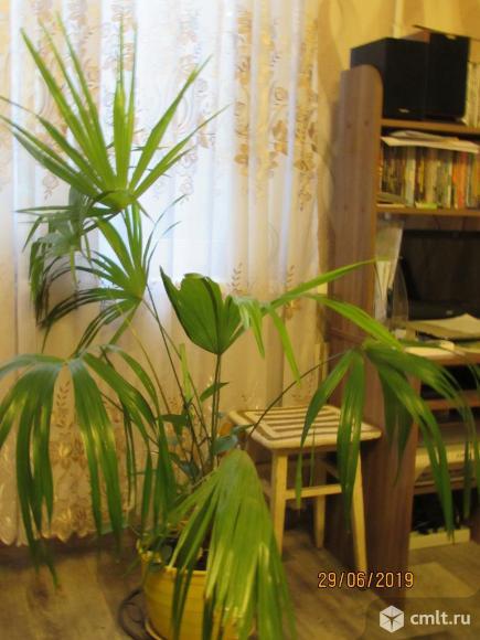 Пальма. Фото 1.