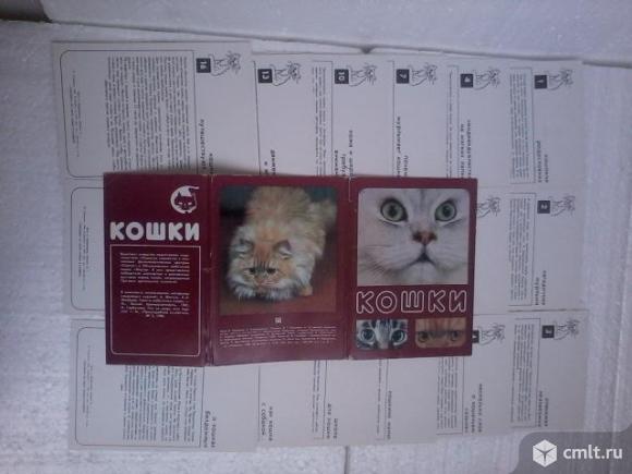Набор открыток СССР . Кошки.. Фото 5.