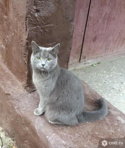Пропала дымчатая кошка в ю.з.. Фото 1.