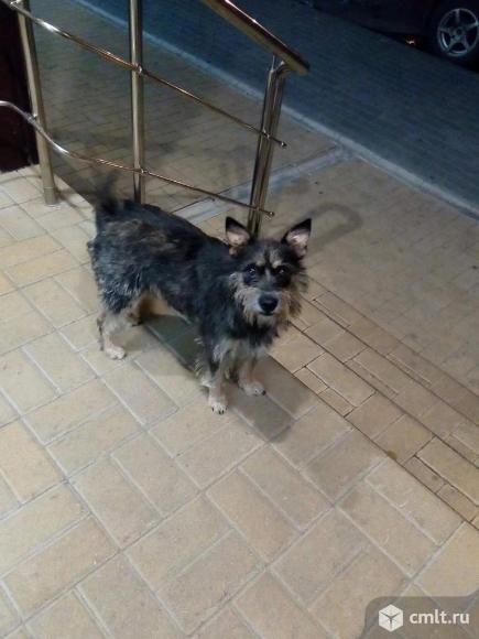 Замечена домашняя собака. Фото 1.