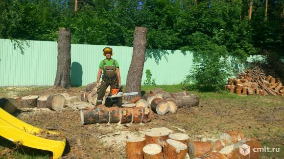 спиливание сухой сосны по частям. Спил деревьев в Воронеже любой сложности. Спилить дерево недорого. Опиловка деревьев. Спил аварийного дерева заказать