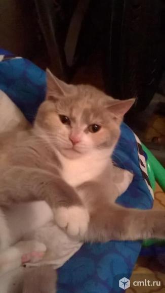 Кошечку в хорошие руки отдам. Фото 1.