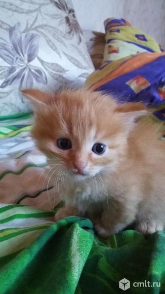 Отдам котят. Фото 1.