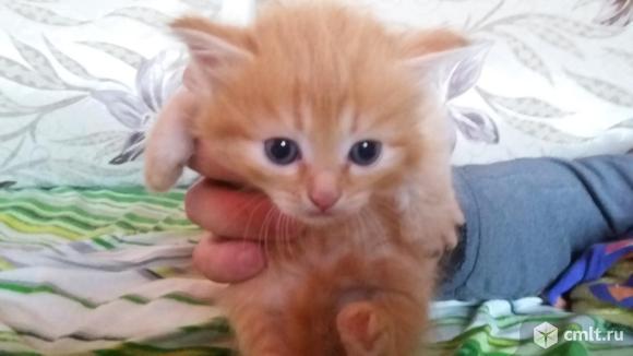 Отдам котят. Фото 6.