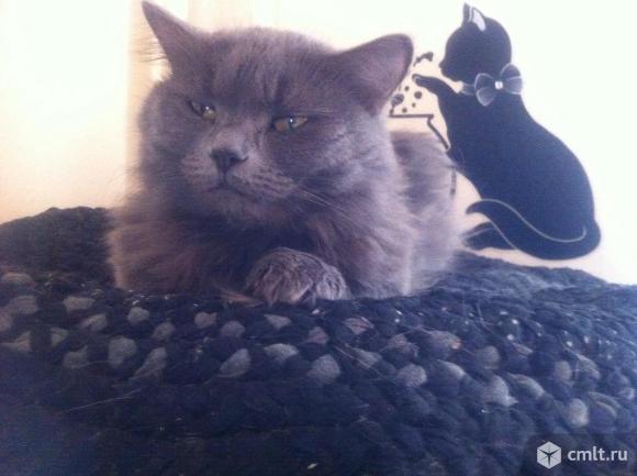 Стерилизованная кошка. Фото 1.