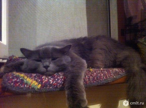Стерилизованная кошка. Фото 2.