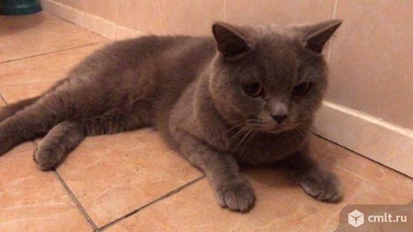 Молодой породистый котик в добрые руки. Фото 1.