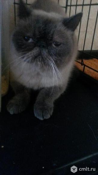 Кошка в добрые руки. Фото 3.