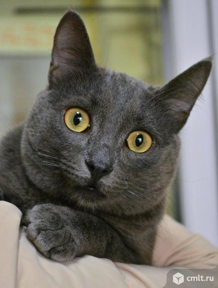 Котик Том ищет дом. Фото 1.