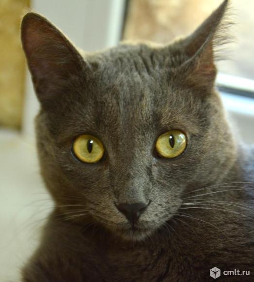 Котик Том ищет дом. Фото 3.