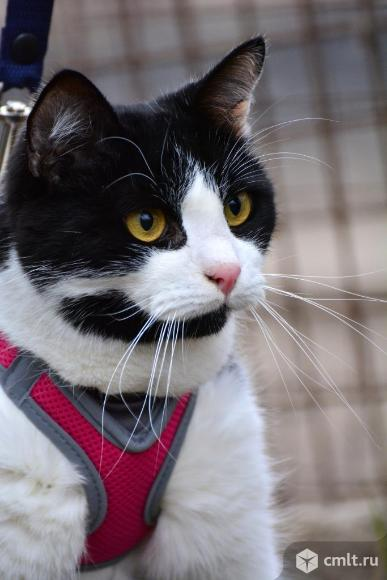 Спокойный кот в хорошие руки. Фото 1.