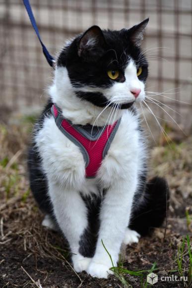 Спокойный кот в хорошие руки. Фото 3.