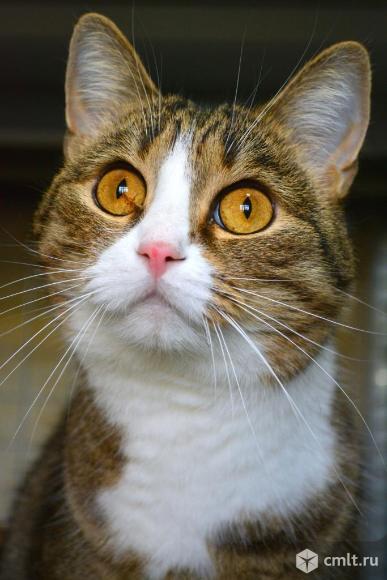 Кошечка Галочка в хорошие руки. Фото 1.