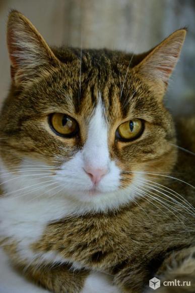 Кошечка Галочка в хорошие руки. Фото 4.