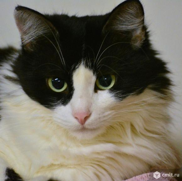 Кошка Веста в хорошие руки. Фото 1.