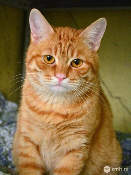 Котик из приюта ищет хозяина. Фото 1.