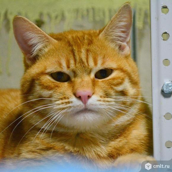 Котик из приюта ищет хозяина. Фото 2.