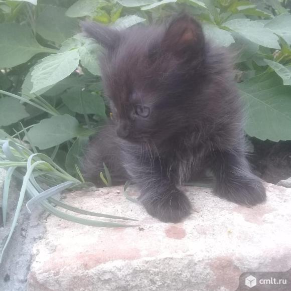 Отдам котенка. Фото 7.