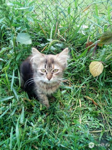Кэйси ищет дом. Фото 1.