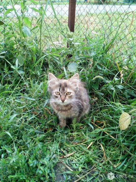 Кэйси ищет дом. Фото 3.