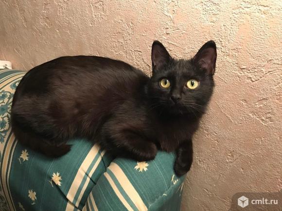 Шикарный черный кот в добрые руки. Фото 1.