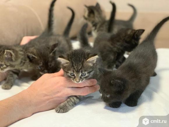 Котята метисы в дар. Фото 1.