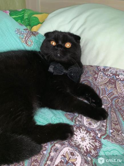Котята метисы в дар. Фото 8.