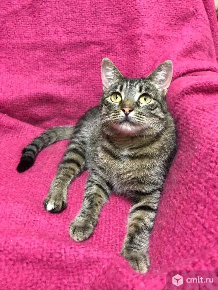 Ласковая кошка Агаша. Фото 5.