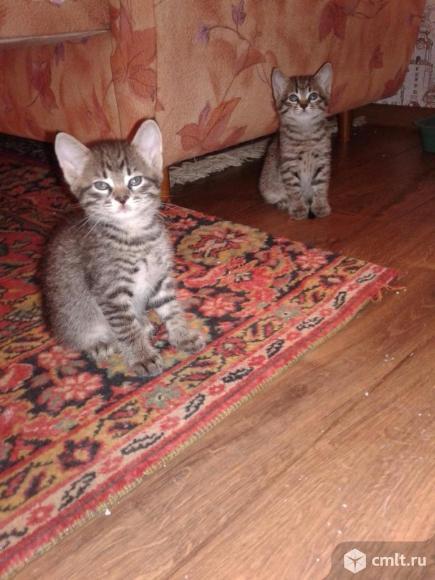 Подарю красивых котят. Фото 1.